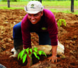Timberfarm_Pflanzer