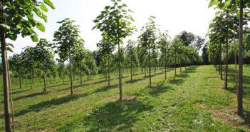 Treeme_plantageIMG_1663